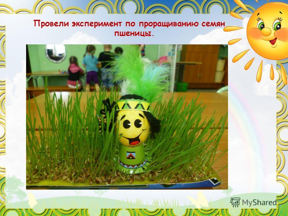 Провели эксперимент по проращиванию семян пшеницы.