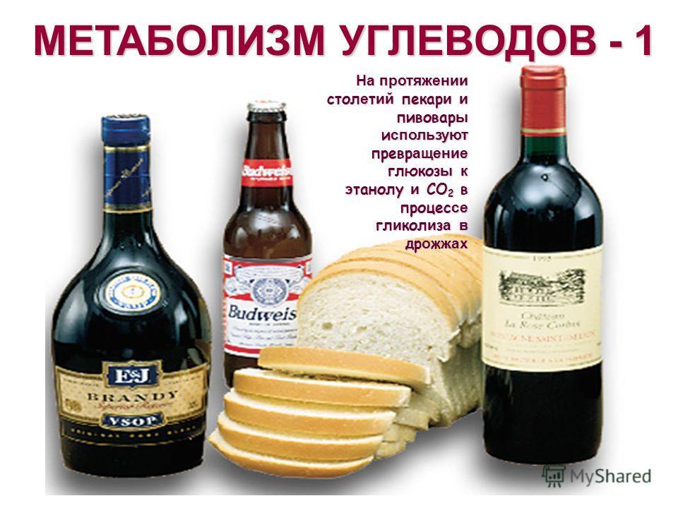 МЕТАБОЛИЗМ УГЛЕВОДОВ - 1 На протяжении стол е т ий пекар и и пивовар ы используют превращение глюкоз ы к этанолу и CO 2 в процессе гл и кол и з а в дрожжах
