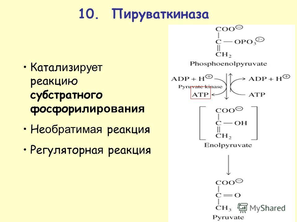10. П и руфатк и газа Катал и з ирует реакцию субстратного фосфорилирования Не обратимая реакция Регуляторна я реакция