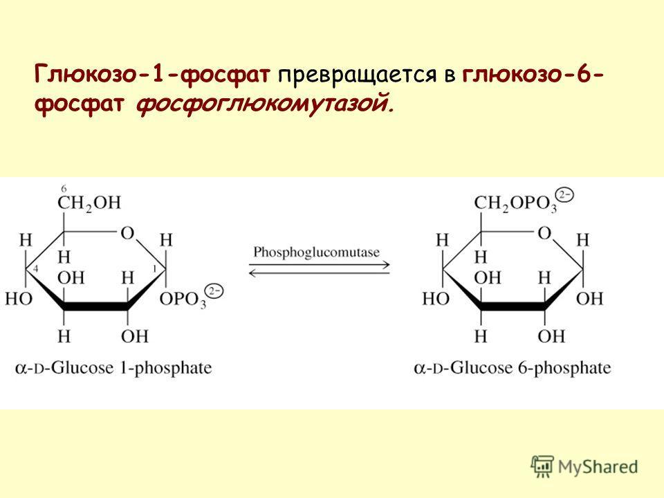 Глюкозо-1-фосфат превращается в глюкозо-6- фосфат фосфоглюкомутазой.