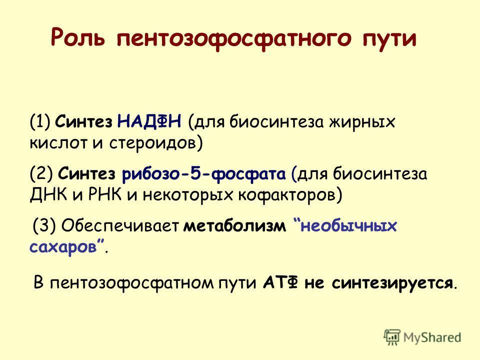 (1) Синтез НАДФН (для биосинтеза жирных кислот и стероидов) (2) Синтез рибозо-5-фосфата (для биосинтеза ДНК и РНК и некоторых кофакторов) (3) Обеспечивает метаболизм необычных сахаров. Роль пентозофосфатного пути В пентозофосфатном пути АТФ не синтез