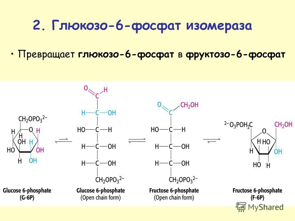 Превращает глюкозо-6-фосфат в фруктозо-6-фосфат 2. Глюкозо-6-фосфат и иизомераза