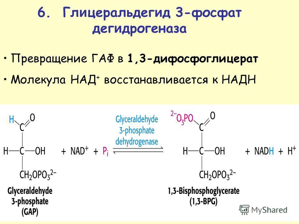 Превращение ГАФ в 1,3-дифосфоглицерат Молекула НАД + восстанавливается к НАДН 6. Гл и церальдег и д 3-фосфат дег и дрогегаза