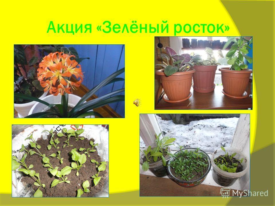 Акция «Зелёный росток»