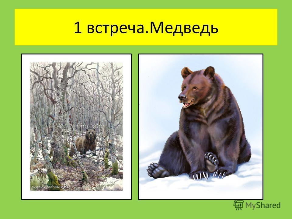 1 встреча.Медведь