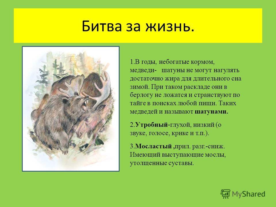 Битва за жизнь. 1. В годы, небогатые кормом, медведи- шатуны не могут нагулять достаточно жира для длительного сна зимой. При таком раскладе они в берлогу не ложатся и странствуют по тайге в поисках любой пищи. Таких медведей и называют шатунами. 2.У