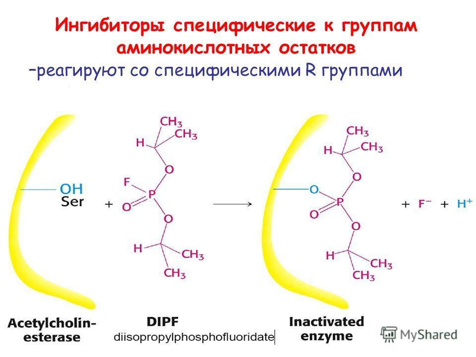 Ингибиторы специфические к группам аминокислотных остатков – реагируют со специфическими R группами аминокислот