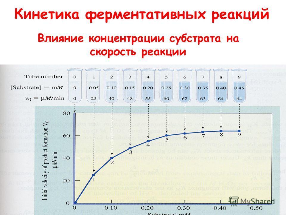 К и нетика ферментативных реакций Влияние концентрации субстрата на скорость реакции