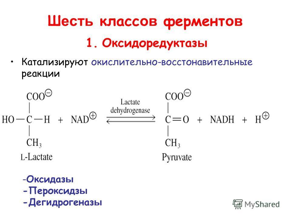 Ш есть класс ов фермент ов 1. Оксидоредуктаз ы Катализируют окислительно-восстановительные реакции -Оксидаз ы -Пероксидз ы -Дег и дрогеназ ы