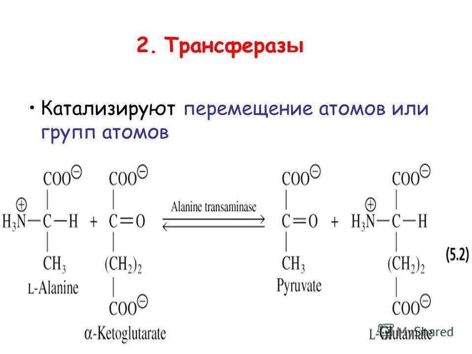 2. Трансфераз ы Катализируют перемещение атомов или групп атомов