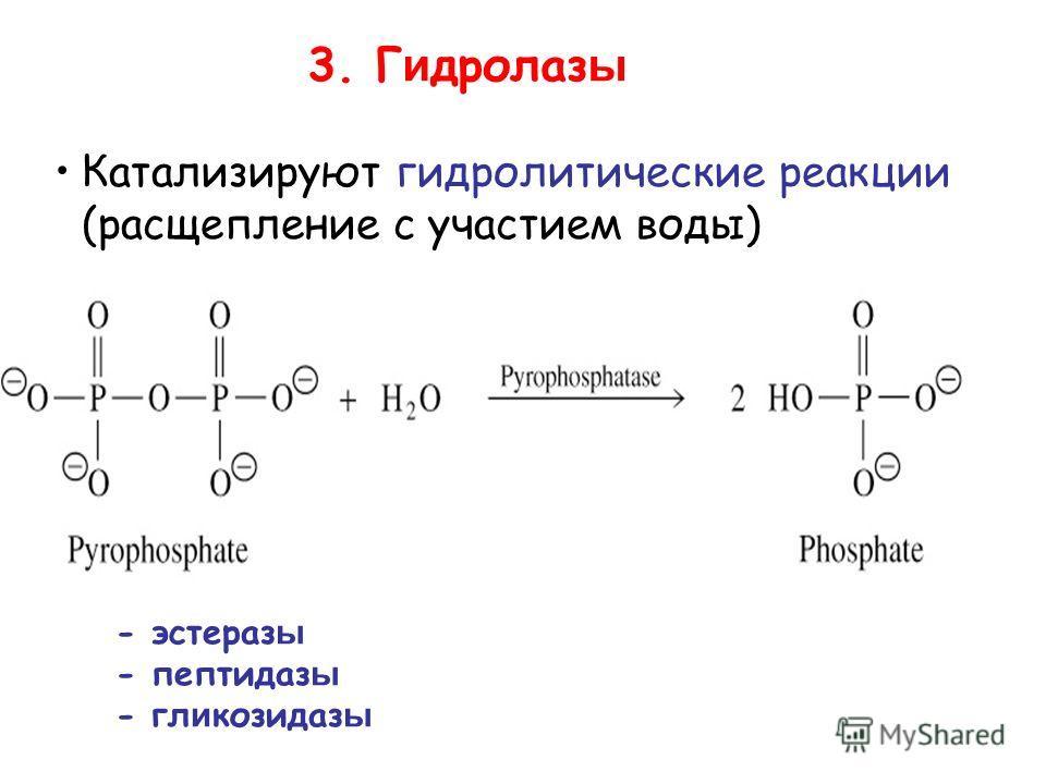 3. Г и дролаз ы Катализируют гидролитические реакции (расщепление с участием воды) - эстераз ы - пептидаз ы - гликозид азы