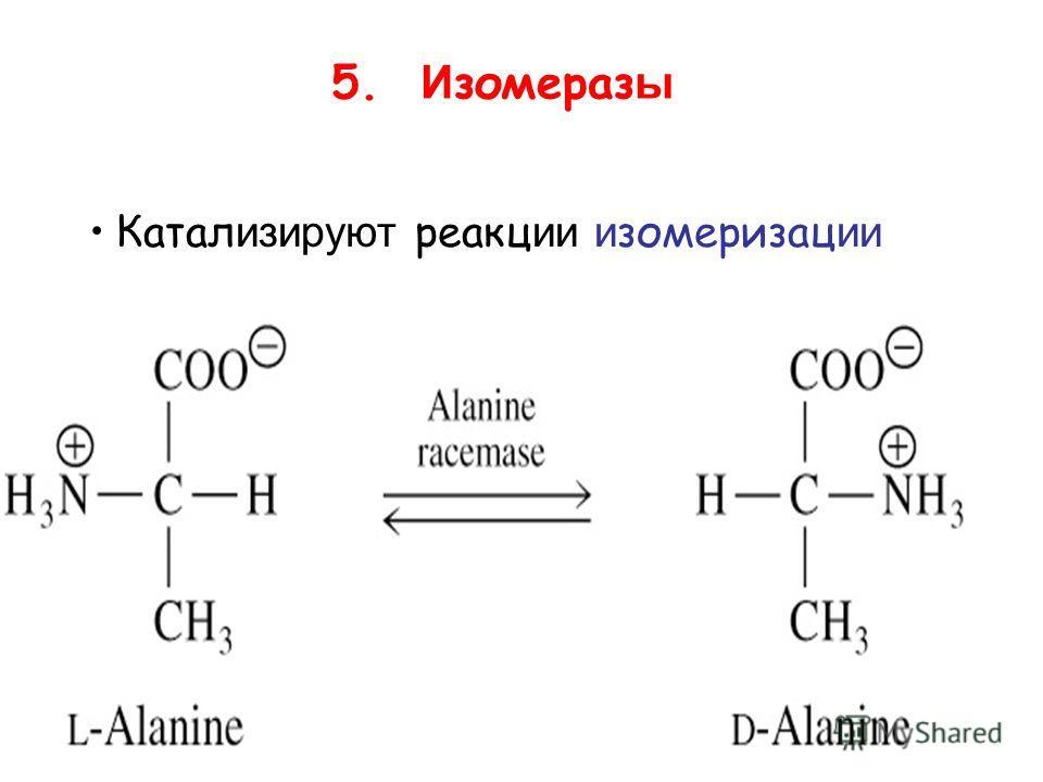5. И зомераз ы Катал изируют реакции изомеризации