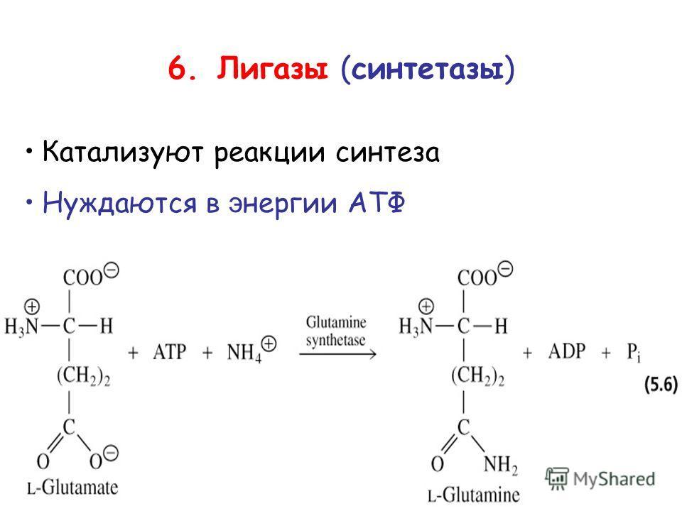 6. Лигазы (синтетазы) Катализуют реакции синтеза Нуждаются в энергии АТФ