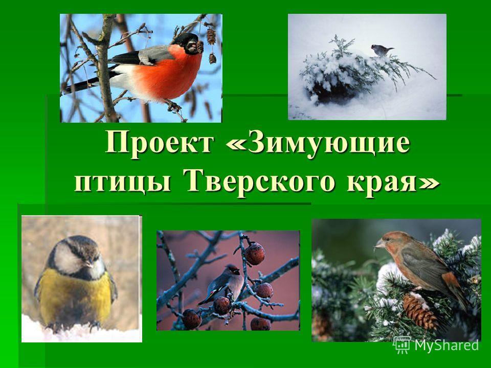 Проект « Зимующие птицы Тверского края »