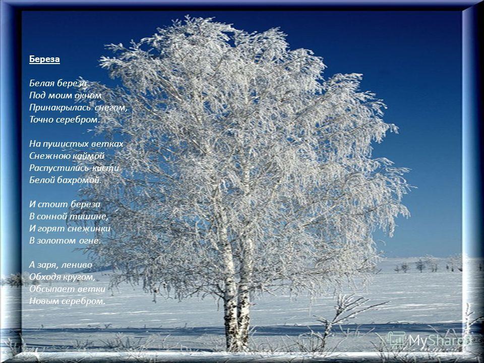 Береза Белая береза Под моим окном Принакрылась снегом, Точно серебром. На пушистых ветках Снежною каймой Распустились кисти Белой бахромой. И стоит береза В сонной тишине, И горят снежинки В золотом огне. А заря, лениво Обходя кругом, Обсыпает ветки