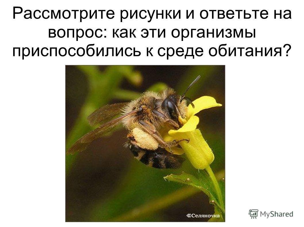 Рассмотрите рисунки и ответьте на вопрос: как эти организмы приспособились к среде обитания?