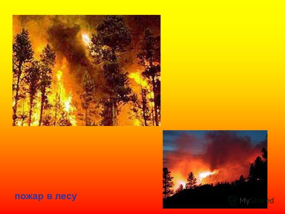 пожар в лесу Пожар в лесу.