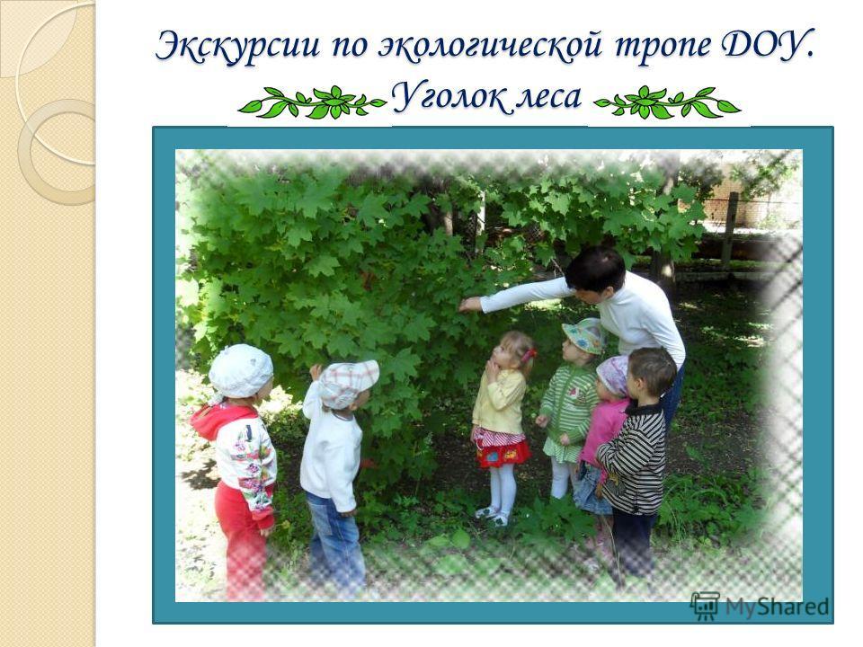 Экскурсии по экологической тропе ДОУ. Уголок леса