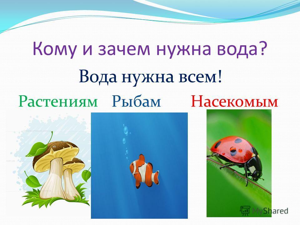 Кому и зачем нужна вода? Вода нужна всем! Растениям Рыбам Насекомым