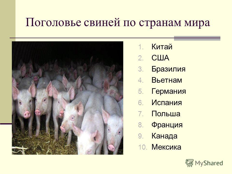 Поголовье свиней по странам мира 1. Китай 2. США 3. Бразилия 4. Вьетнам 5. Германия 6. Испания 7. Польша 8. Франция 9. Канада 10. Мексика