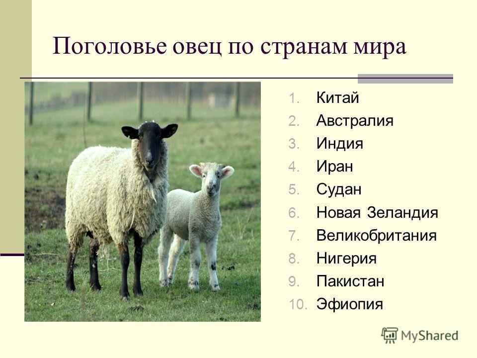 Поголовье овец по странам мира 1. Китай 2. Австралия 3. Индия 4. Иран 5. Судан 6. Новая Зеландия 7. Великобритания 8. Нигерия 9. Пакистан 10. Эфиопия