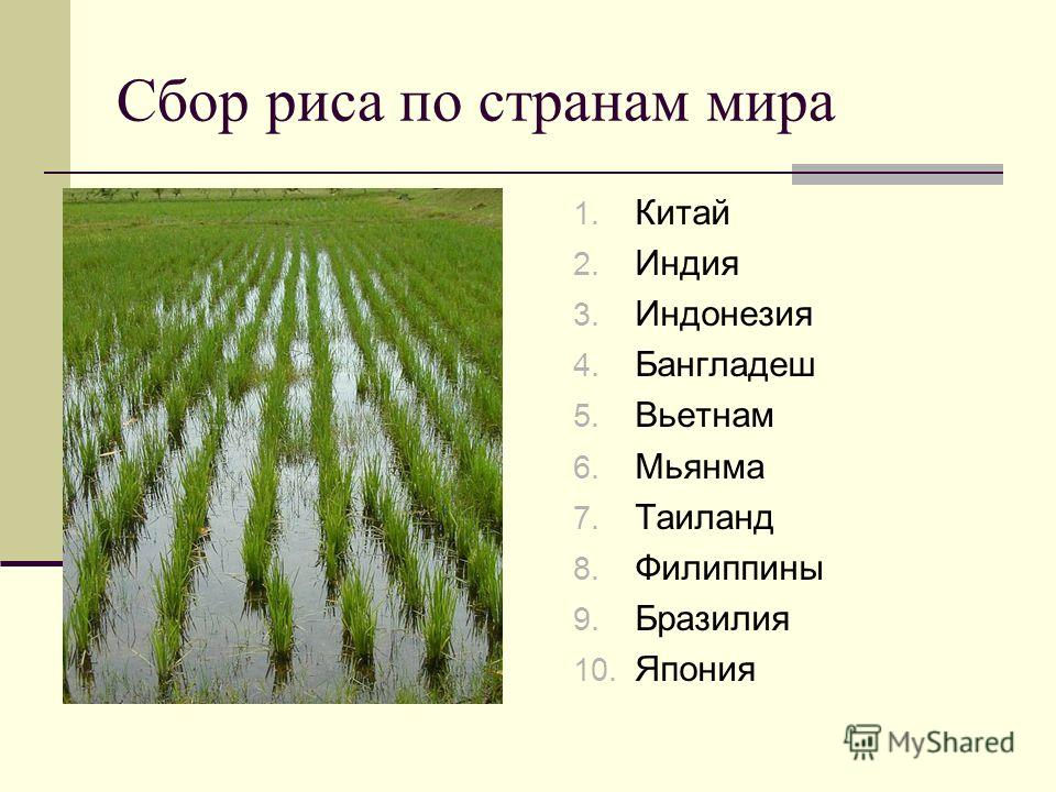 Сбор риса по странам мира 1. Китай 2. Индия 3. Индонезия 4. Бангладеш 5. Вьетнам 6. Мьянма 7. Таиланд 8. Филиппины 9. Бразилия 10. Япония