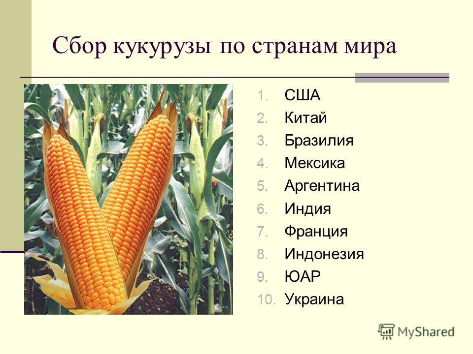 Сбор кукурузы по странам мира 1. США 2. Китай 3. Бразилия 4. Мексика 5. Аргентина 6. Индия 7. Франция 8. Индонезия 9. ЮАР 10. Украина