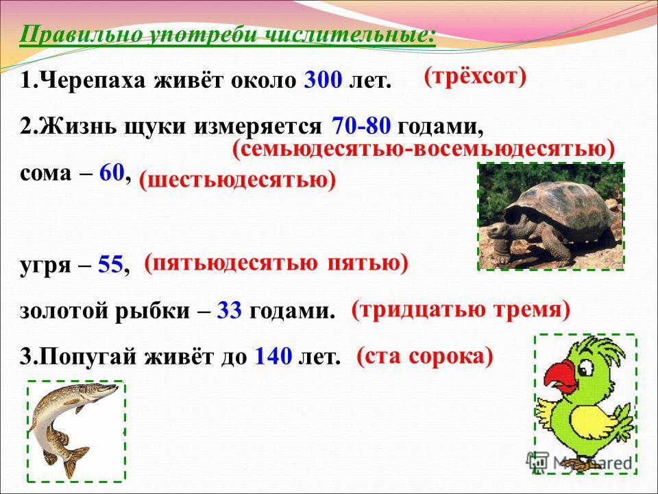 Правильно употреби числительные: 1. Черепаха живёт около 300 лет. 2. Жизнь щуки измеряется 70-80 годами, сома – 60, угря – 55, золотой рыбки – 33 годами. 3. Попугай живёт до 140 лет. (трёхсот) (семьюдесятью-восемььюдесятью) (шестьюдесятью) (пятьюдеся