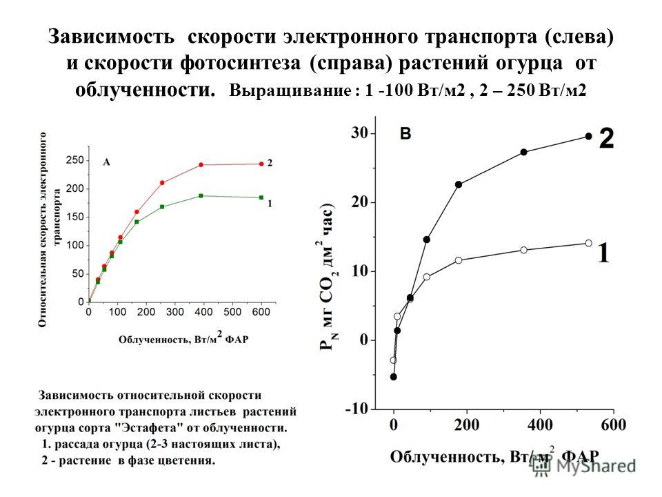 Зависимость скорости электронного транспорта (слева) и скорости фотосинтеза (справа) растений огурца от облученности. Выращивание : 1 -100 Вт/м 2, 2 – 250 Вт/м 2