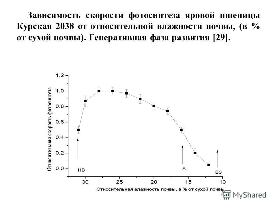 Зависимость скорости фотосинтеза яровой пшеницы Курская 2038 от относительной влажности почвы, (в % от сухой почвы). Генеративная фаза развития [29].