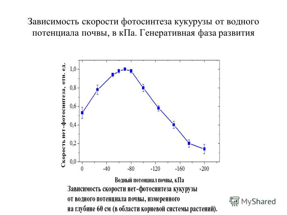 Зависимость скорости фотосинтеза кукурузы от водного потенциала почвы, в к Па. Генеративная фаза развития