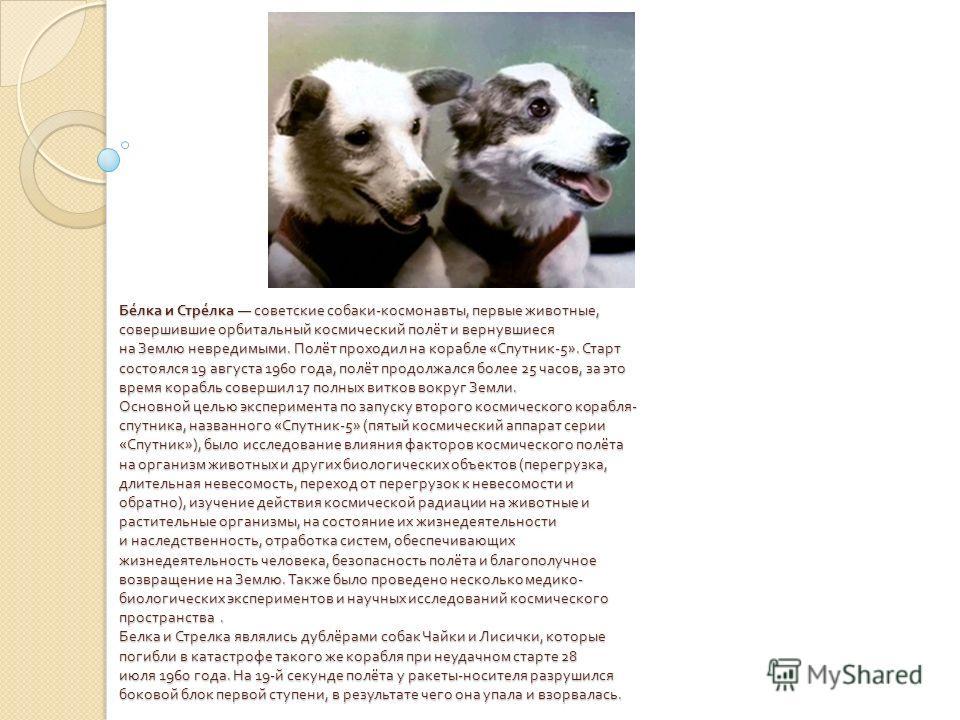 Белка и Стрелка советские собаки - космонавты, первые животные, совершившие орбитальный космический полёт и вернувшиеся на Землю невредимыми. Полёт проходил на корабле « Спутник -5». Старт состоялся 19 августа 1960 года, полёт продолжался более 25 ча
