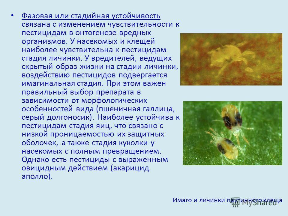 Фазовая или стадийная устойчивость связана с изменением чувствительности к пестицидам в онтогенезе вредных организмов. У насекомых и клещей наиболее чувствительна к пестицидам стадия личинки. У вредителей, ведущих скрытый образ жизни на стадии личинк