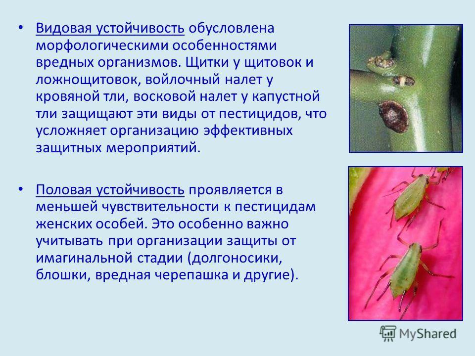 Видовая устойчивость обусловлена морфологическими особенностями вредных организмов. Щитки у щитовок и ложнощитовок, войлочный налет у кровяной тли, восковой налет у капустной тли защищают эти виды от пестицидов, что усложняет организацию эффективных