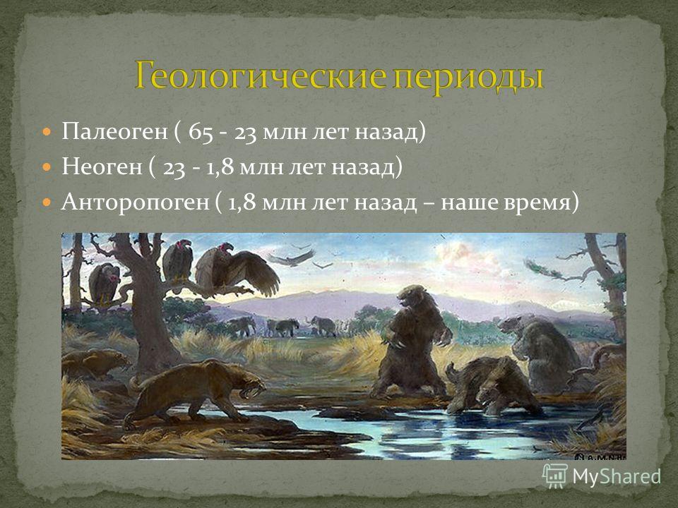 Палеоген ( 65 - 23 млн лет назад) Неоген ( 23 - 1,8 млн лет назад) Анторопоген ( 1,8 млн лет назад – наше время)