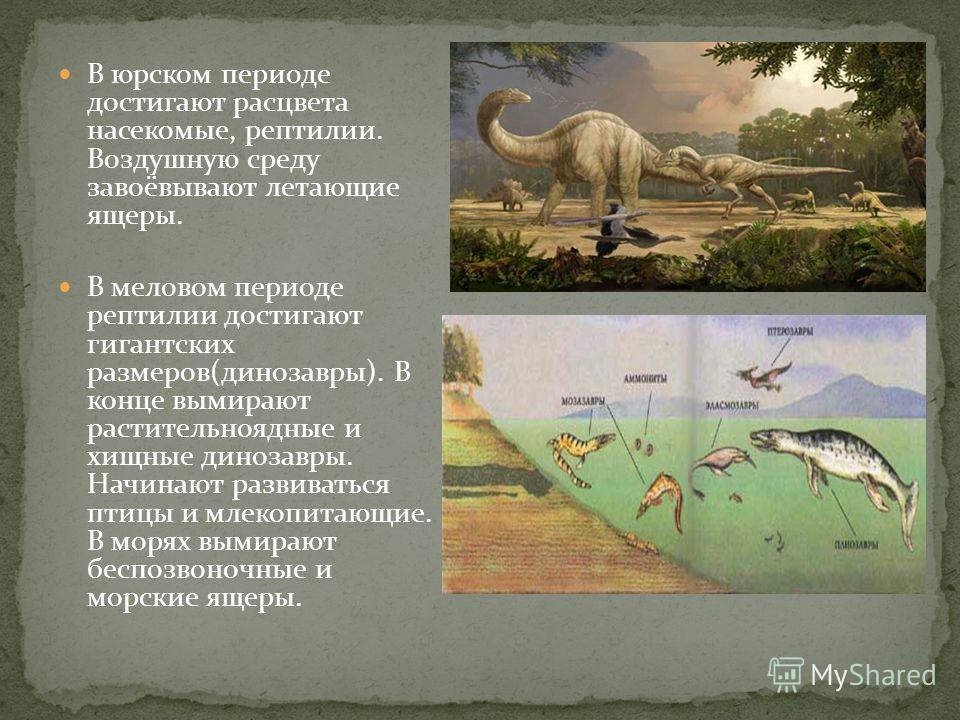 В юрском периоде достигают расцвета насекомые, рептилии. Воздушную среду завоёвывают летающие ящеры. В меловом периоде рептилии достигают гигантских размеров(динозавры). В конце вымирают растительноядные и хищные динозавры. Начинают развиваться птицы