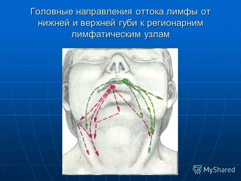 Головные направления оттока лимфы от нижней и верхней губи к регионарним лимфатическим узлам
