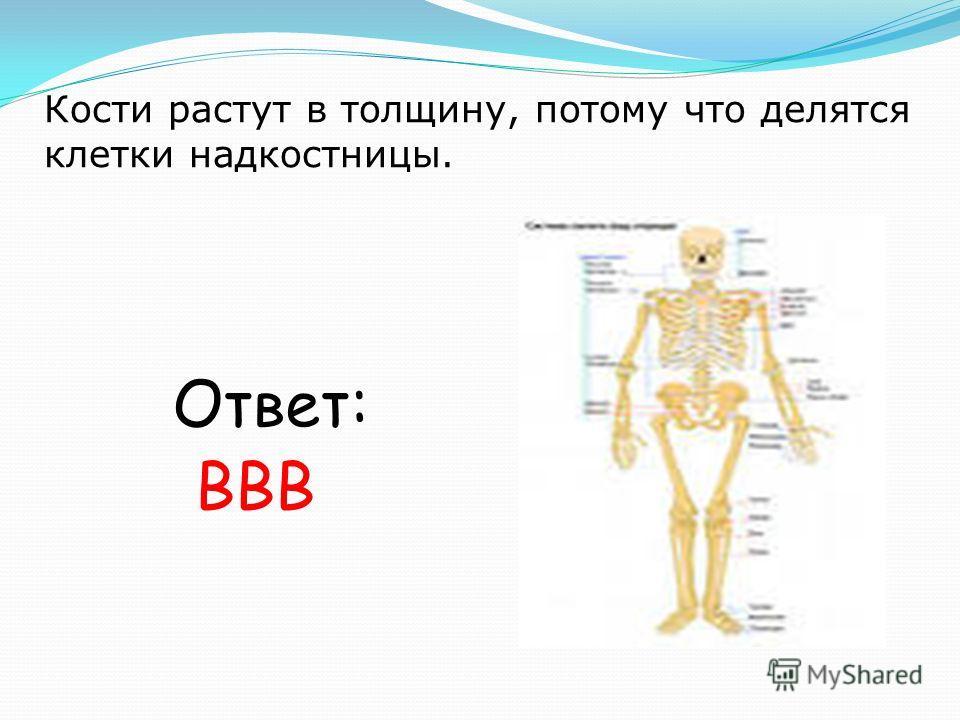 Кости растут в толщину, потому что делятся клетки надкостницы. Ответ: ВВВ