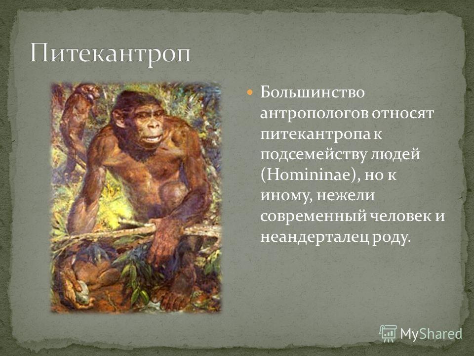 Большинство антропологов относят питекантропа к подсемейству людей (Homininae), но к иному, нежели современный человек и неандерталец роду.
