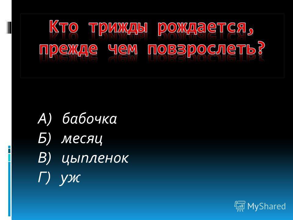 А) бабочка Б) месяц В) цыпленок Г) уж