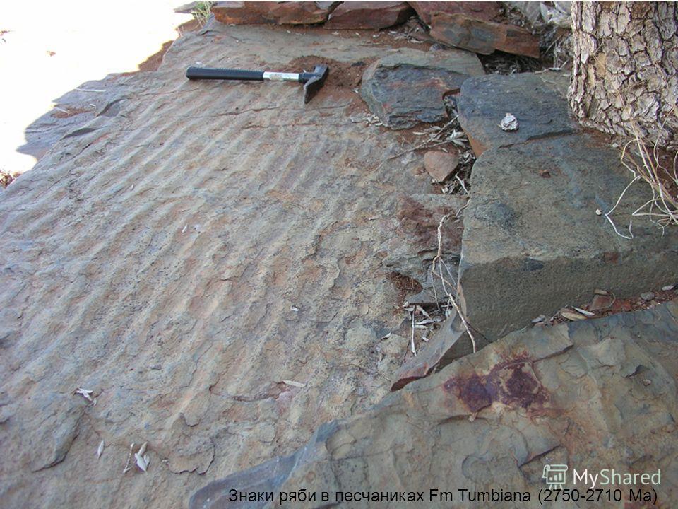 Знаки ряби в песчаниках Fm Tumbiana (2750-2710 Mа)
