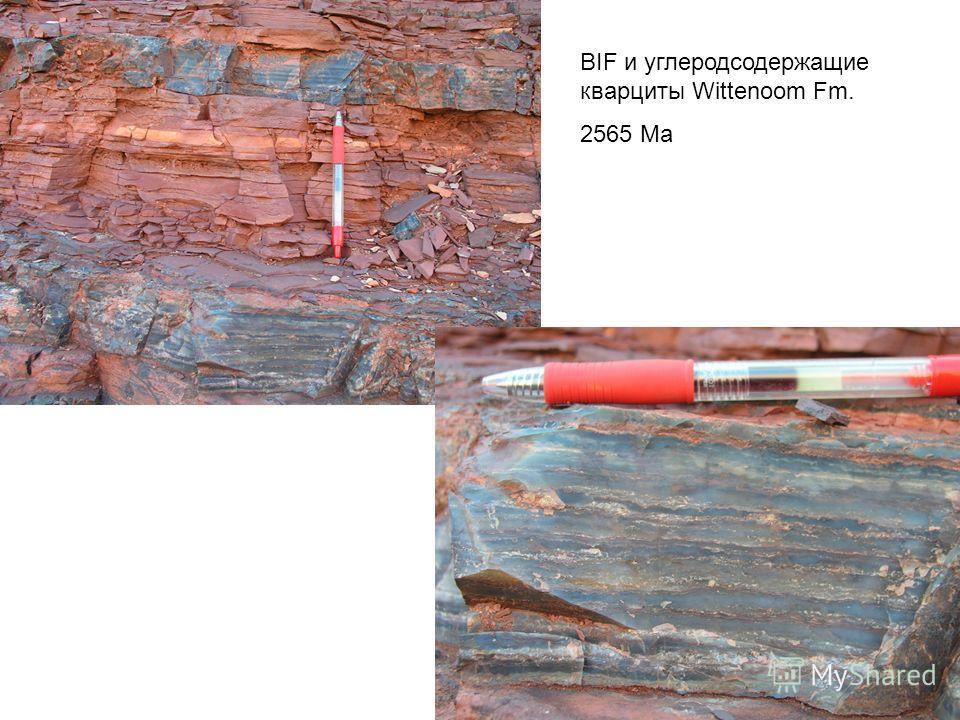 BIF и углеродсодержащие кварциты Wittenoom Fm. 2565 Ма