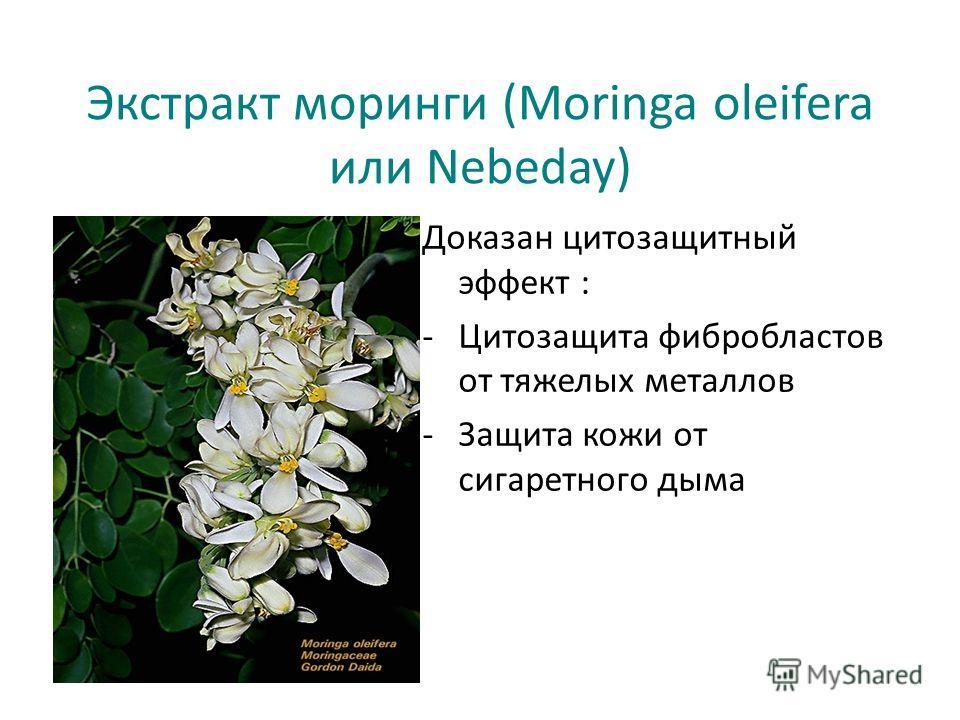 Экстракт моринги (Moringa oleifera или Nebeday) Доказан цитозащитный эффект : -Цитозащита фибробластов от тяжелых металлов -Защита кожи от сигаретного дыма
