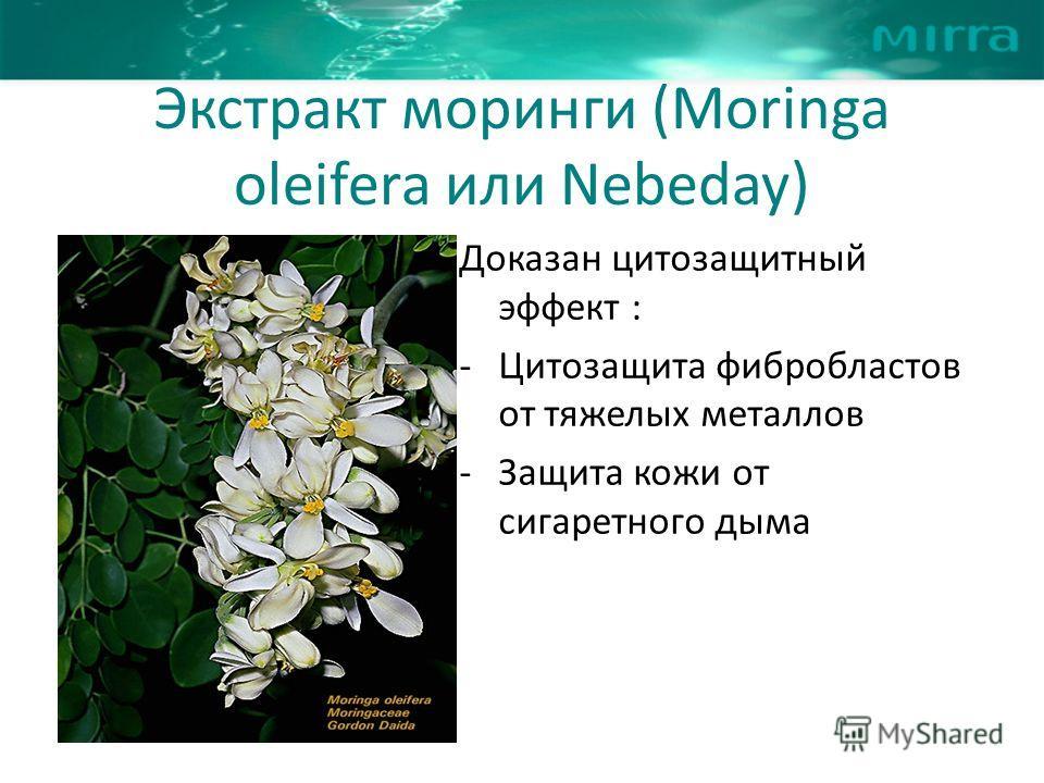 Экстракт моринги (Moringa oleifera или Nebeday) Доказан цитозащитный эффект : - Цитозащита фибробластов от тяжелых металлов - Защита кожи от сигаретного дыма