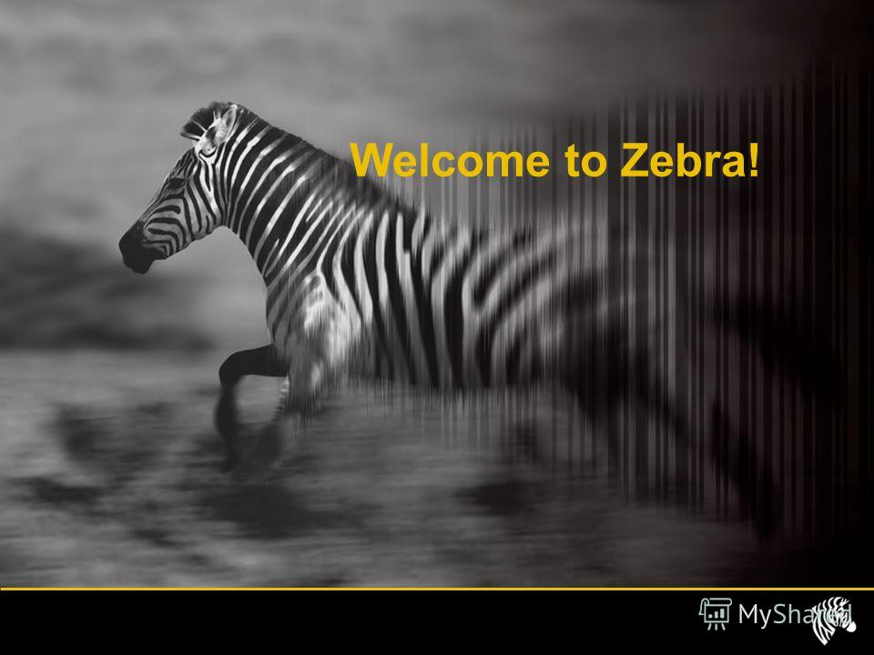 Welcome to Zebra!