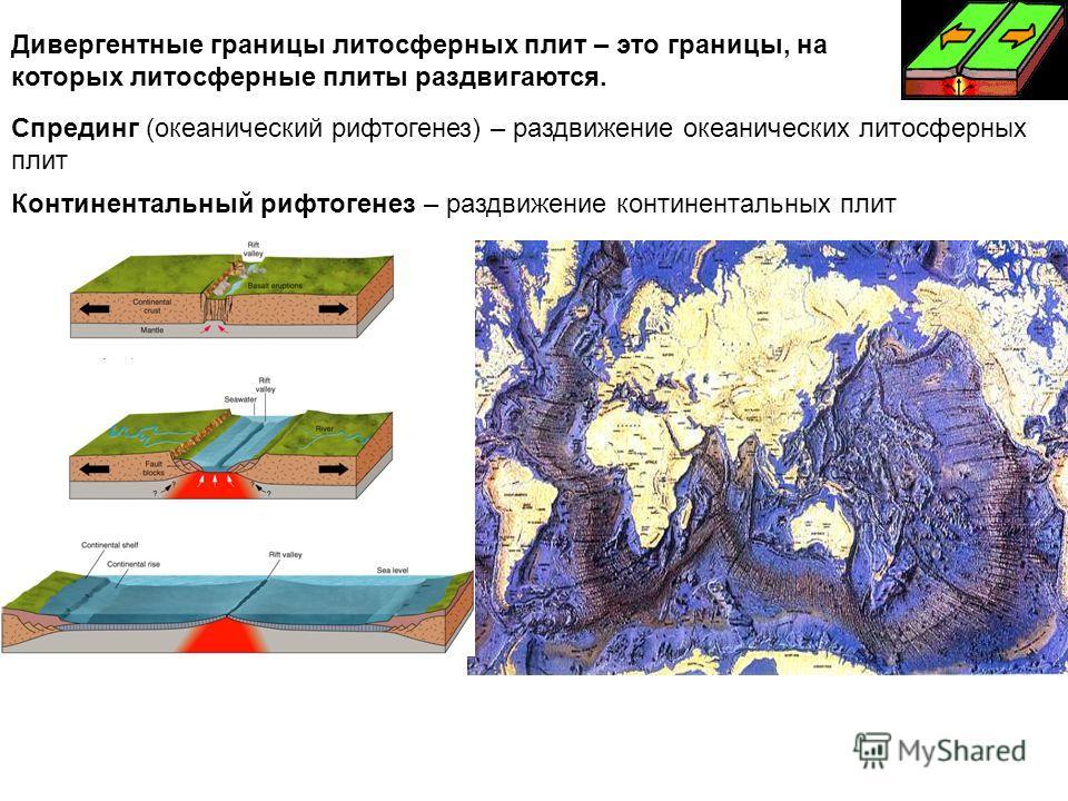 Дивергентные границы литосферных плит – это границы, на которых литосферные плиты раздвигаются. Спрединг (океанический рифтогенез) – раздвижение океанических литосферных плит Континентальный рифтогенез – раздвижение континентальных плит