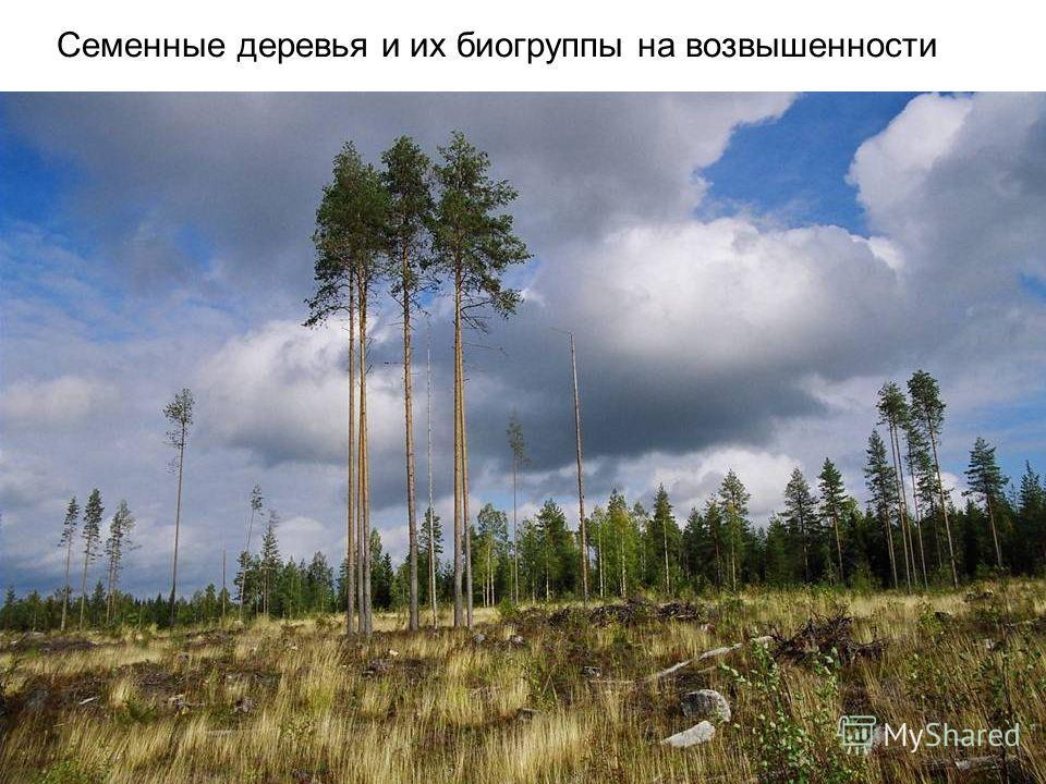 Семенные деревья и их био группы на возвышенности