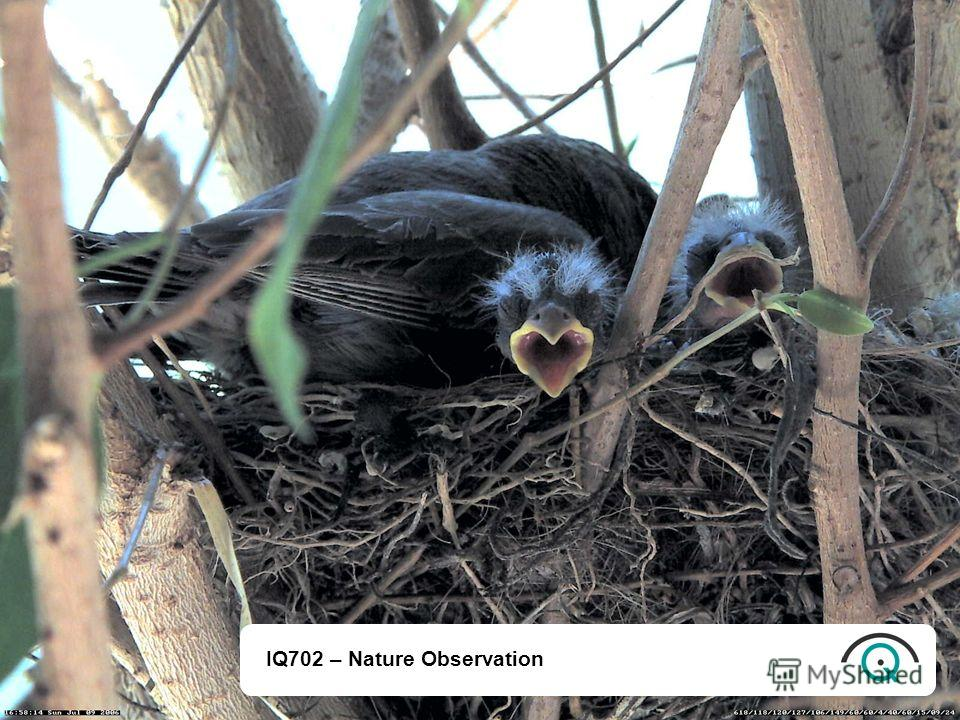 IQ702 – Nature Observation