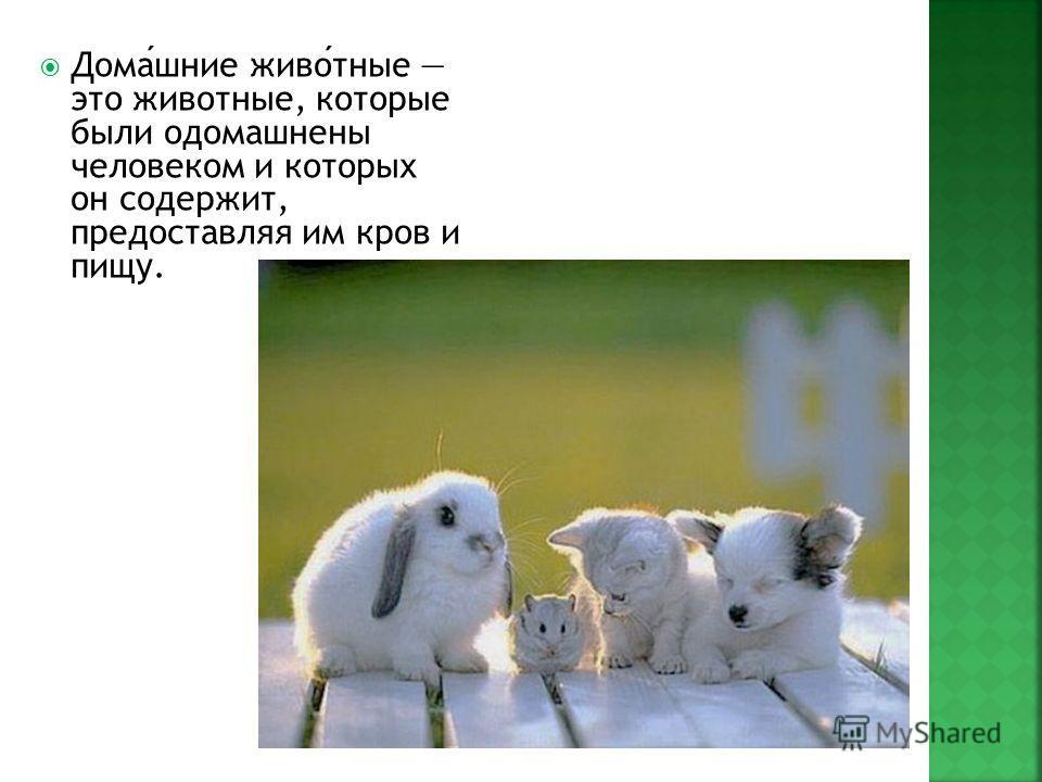 Домашние животные это животные, которые были одомашнены человеком и которых он содержит, предоставляя им кров и пищу.