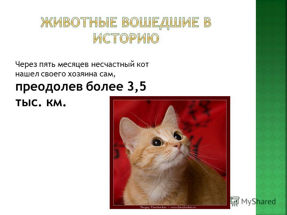 Через пять месяцев несчастный кот нашел своего хозяина сам, преодолев более 3,5 тыс. км.